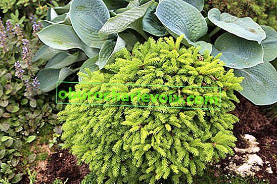 Mineraldünger für Gartenpflanzen