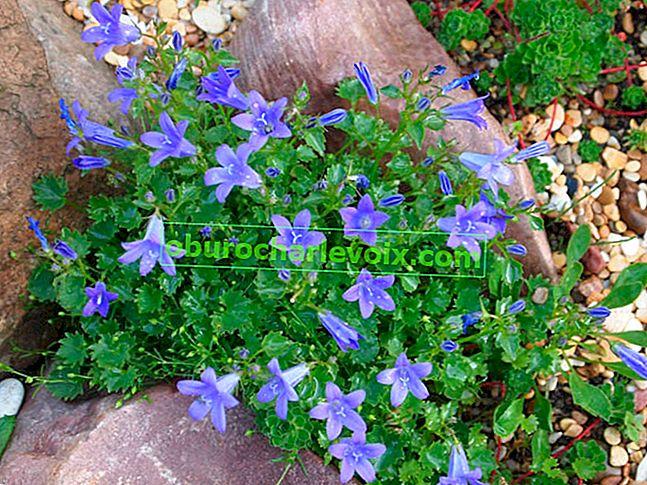 Miniaturní rostliny pro malou zahradu