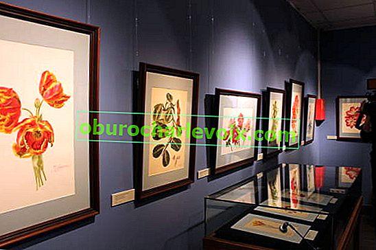 Botanisches Zeichnen - Wissenschaft und Kunst