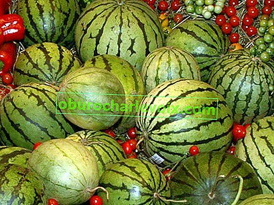 Uralský meloun není pohádka