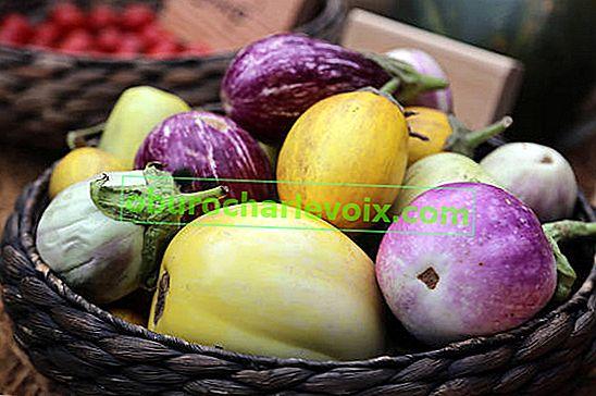 Патладжан: сортове за най-изтънчен вкус