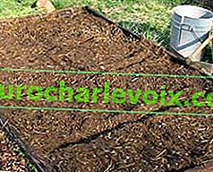 Wintersaat und Anpflanzung von Gemüsepflanzen