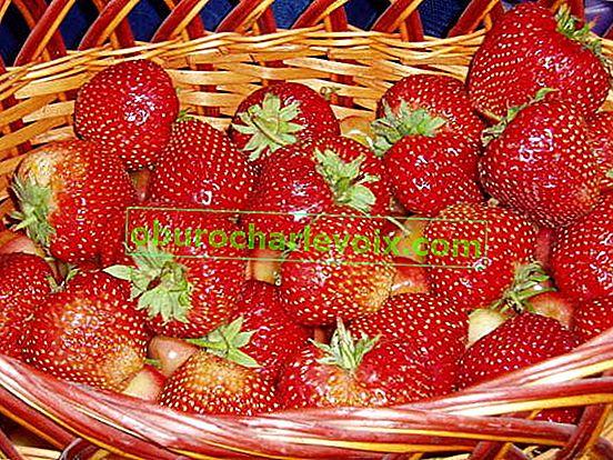 Асортимент от вашата ягодова плантация