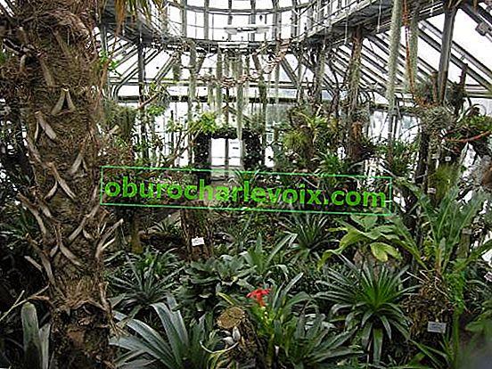 Berliner Botanischer Garten