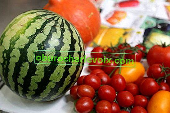 Užitečné bobule - meloun