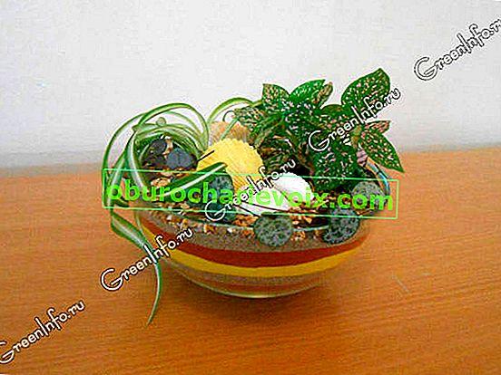 Флорариуми с декоративен пясък