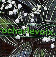 Perle Frühlingsblume - Maiglöckchen