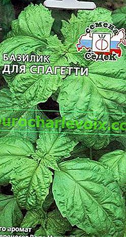 Královská bylinková bazalka nebo zahradní záhon se šarmem