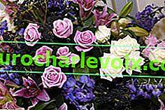 Blumenverträglichkeit in einem Blumenstrauß