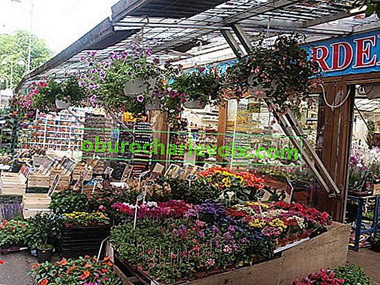 Plovoucí květinový trh v Amsterdamu