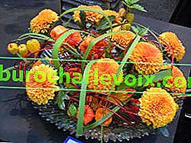 Chryzantémy: nové barvy podzimu