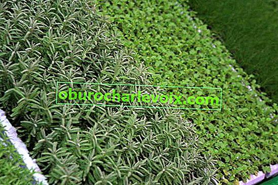 Изборът на торове за хранене на растенията