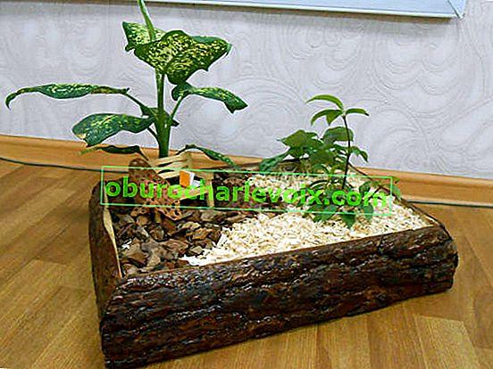 Phytokompositionen aus Zimmerpflanzen und natürlichen Materialien
