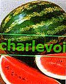 Frühe Sorten und Hybriden der Wassermelone