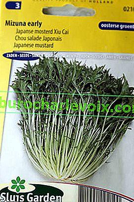 Japanischer Kohl: Sorten, Anbau, Verwendung