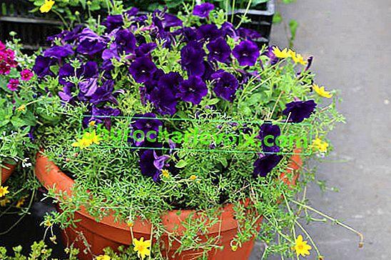 Neue Ampullenpflanzen für die vertikale Gartenarbeit