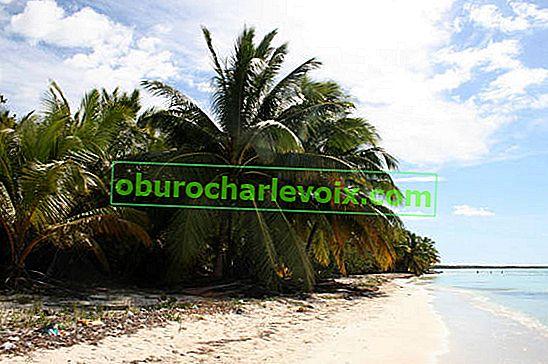 Kokospalme - asiatischer Baum des Lebens