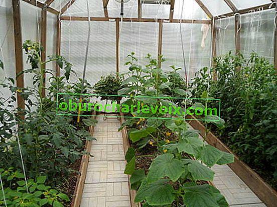 Zeleninové plodiny ke společnému pěstování ve skleníku