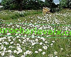 Тревни площи за мързеливи