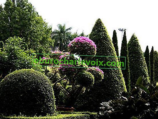 Figurierte Geschichte und Topiary im Stil von