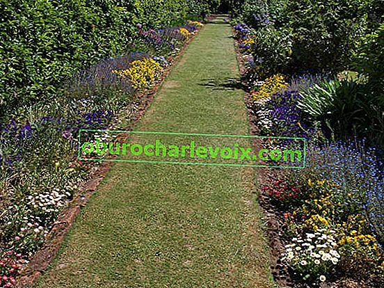 Mixborder - nejmódnější květinová zahrada