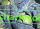 Pflanzenernährung und -schutz