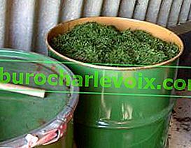 Билкови закваски за хранене на растенията