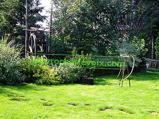 Bewässerungsregeln für Pflanzen
