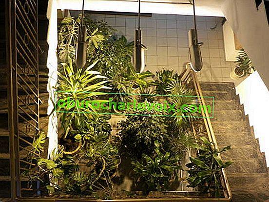 Beleuchtung für Zimmerpflanzen