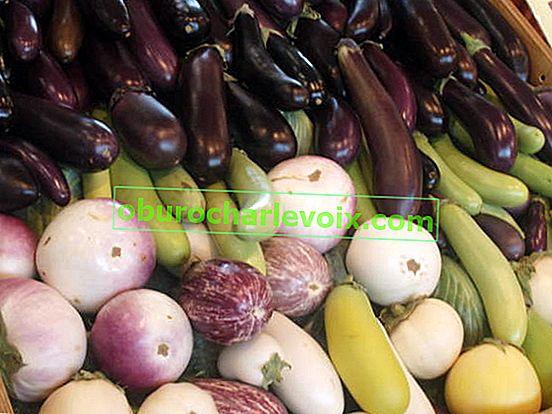 Патладжанът е зеленчук с дълголетие