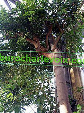 Канела: Ползите от сладкото дърво