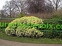 Английски градини