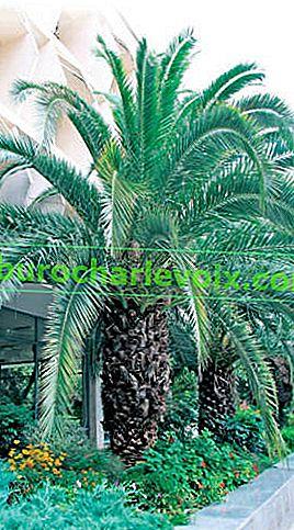 Palmen - Fürsten der Pflanzenwelt