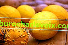 Melonen klassisch und exotisch