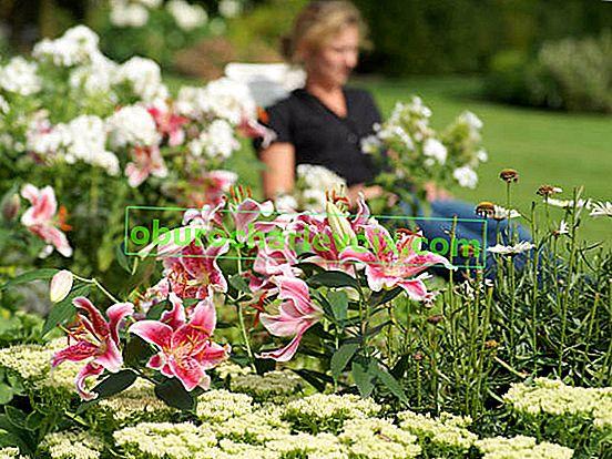 Pflanzen von Zwiebelblumen - Der einfache Weg zu einem schönen Garten