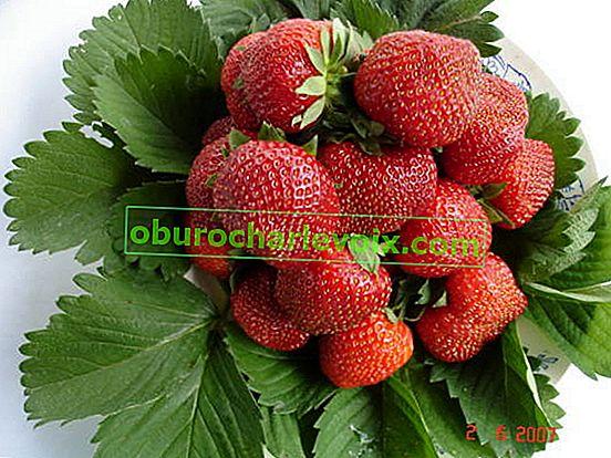 Тор за ягоди