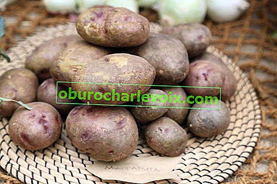 Nützliche Eigenschaften von Kartoffeln