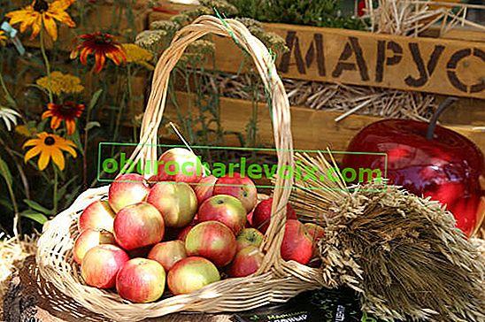 Užitečné vlastnosti jablek a jablečné terapie