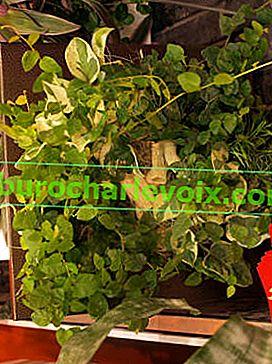 Vertikale Gartenarbeit im Innenraum