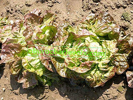 Как да избегнем изчерпването на почвата