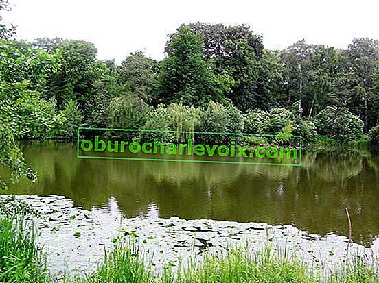 Botanischer Garten Kaliningrad