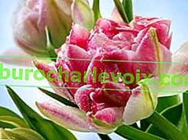 Frühling: Blumen für die Lieben