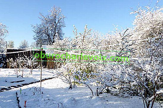 Bäume und Sträucher dekorativ im Winter