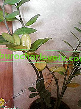 Zimmerpflanzen umpflanzen