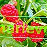 Erdbeerspinatmarmelade