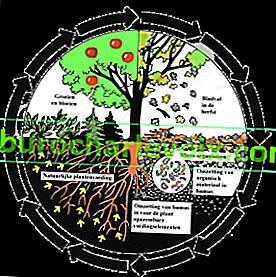 Mikroorganismen sind die Grundlage für die Wirksamkeit von Esostyle-Düngemitteln